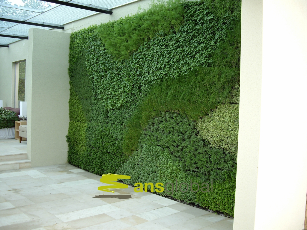 Living Walls For Auckland Christchurch Amp Nz Wide Oasis