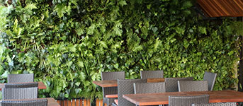 Oasis Living Walls