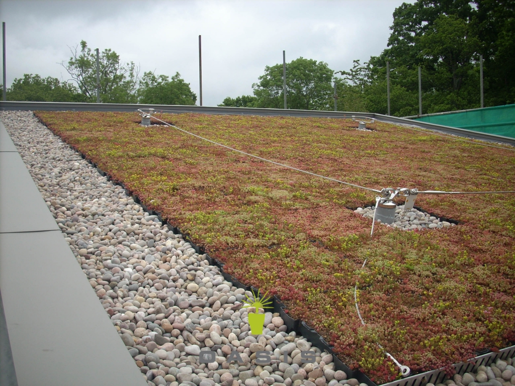 Green roofs for auckland christchurch nz wide oasis for Grow landscapes christchurch