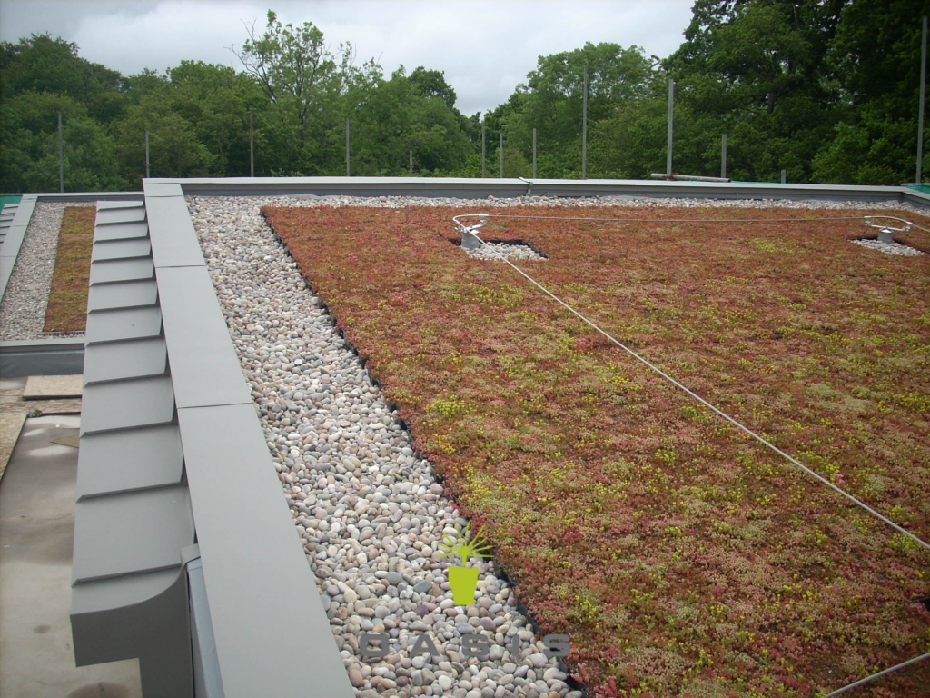 Green Roofs For Auckland Christchurch Amp Nz Wide Oasis