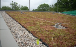Green Roofs (1)