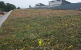 Green Roofs (11)
