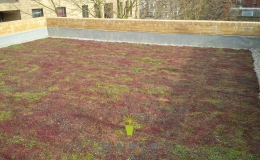 Green Roofs (18)