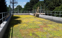 Green Roofs (4)