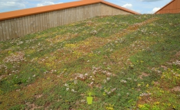 Green Roofs (7)