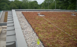 Green Roofs (8)