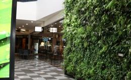 218 Dunedin - Oasis Living Wall