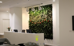 Forte Health - Oasis Living Wall