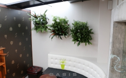 Oasis Living Wall Portraits