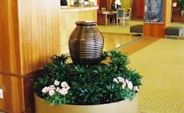 Oasis Hire Plants (2)