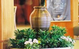 Oasis Hire Plants (3)